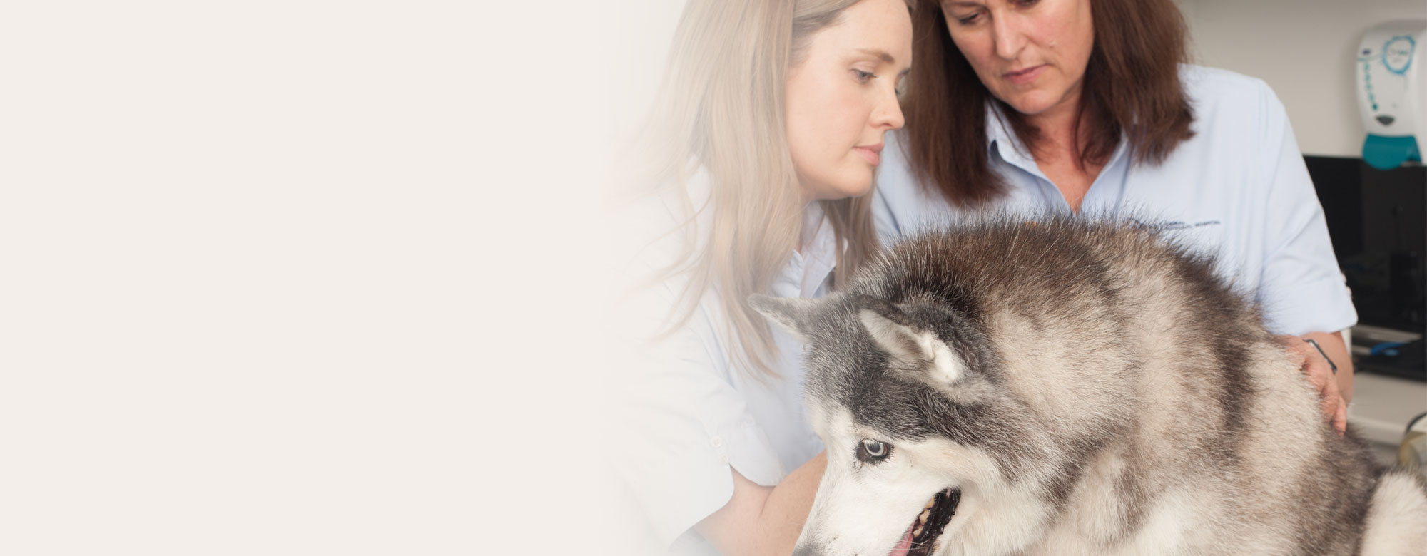 ARH specialist veterinarians assessing a dog