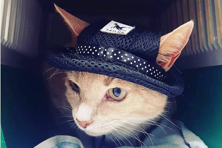 Cat with sun protection hat on
