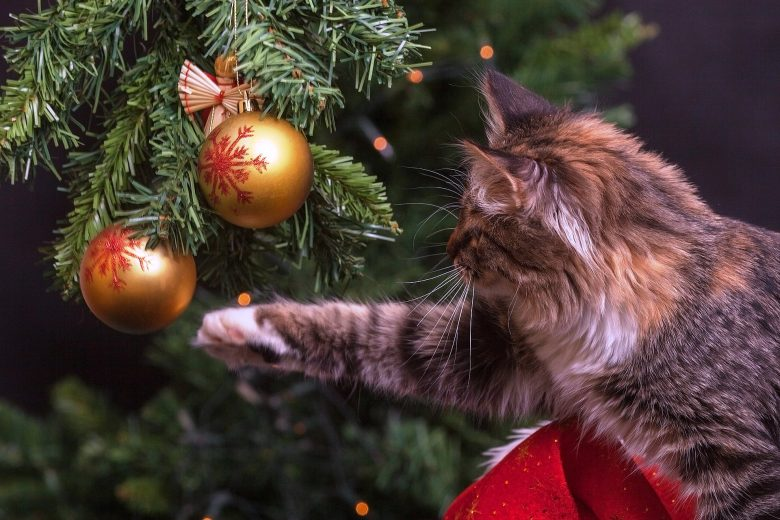 Christmas safety tips for your pet