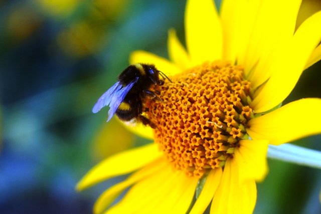 First aid for a pet with a bee sting