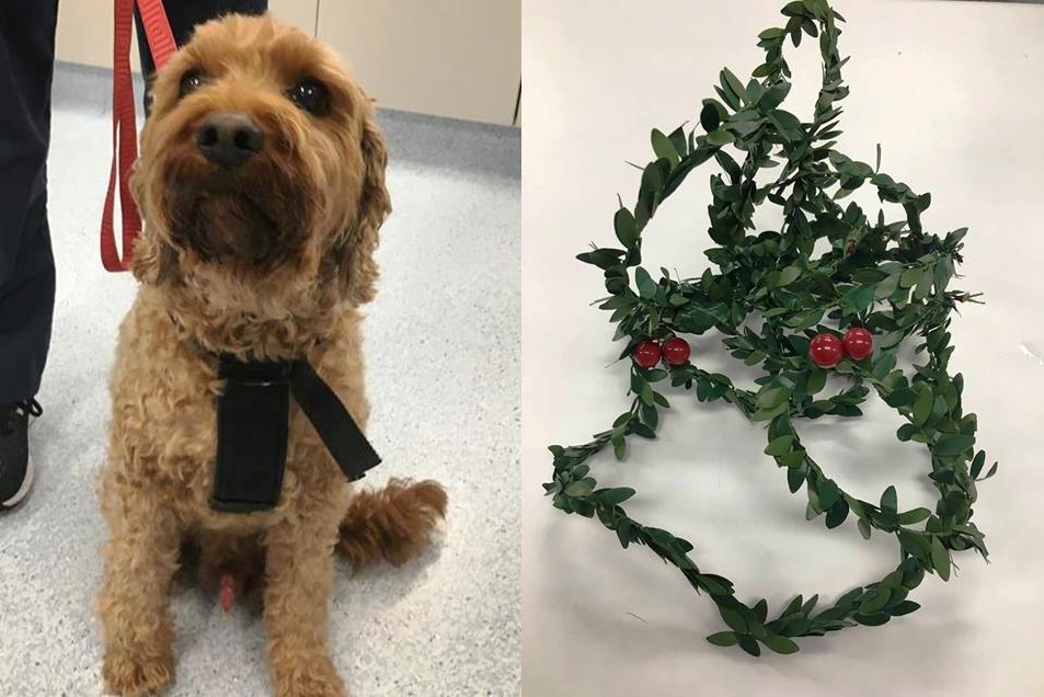 Dog sitting and Christmas wreath