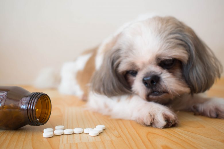 Top human medications, vitamins and oils poisonous to pets