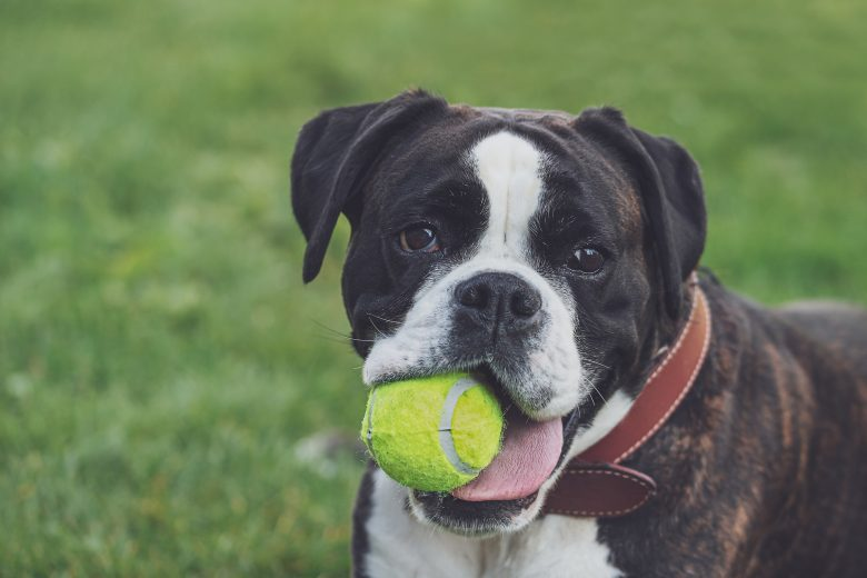 Rubber balls and your dog