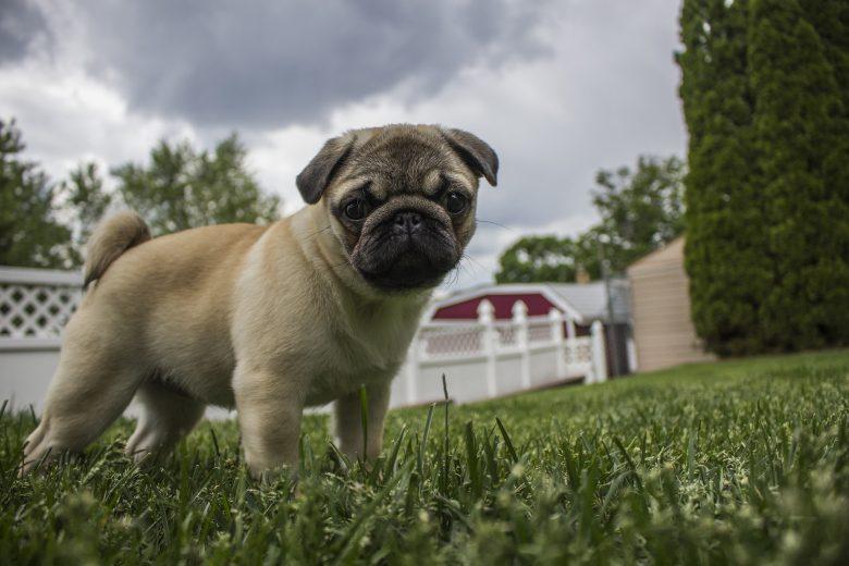 Helping your pet survive storm season